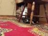 mikado-kotka-do-adopcji-poznan-dopiewo-2