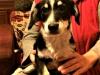 mufinek-szczeniak-do-adopcji-poznan-4