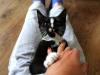 pchla-kotka-do-adopcji-11