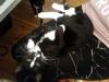 pchla-kotka-do-adopcji-3