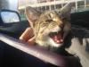 rozyczka-kotka-do-adopcji-3