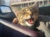 rozyczka-kotka-do-adopcji-4