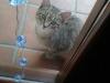 rozyczka-kotka-do-adopcji