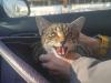 rozyczka-kotka-do-adopcji_0
