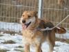 santi-pies-do-adopcji-poznan-dopiewo-2
