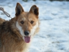 santi-pies-do-adopcji-poznan-dopiewo-5