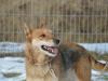 santi-pies-do-adopcji-poznan-dopiewo-8