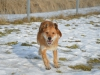 santi-pies-do-adopcji-poznan-dopiewo