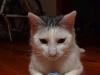 sniezka-kotka-do-adopcji-poznan-2
