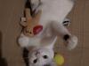 sniezka-kotka-do-adopcji-poznan-5