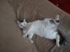 sniezka-kotka-do-adopcji-poznan-6