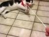 toto-kotek-do-adopcji-2