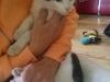 toto-kotek-do-adopcji-4