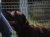 wedel-pies-do-adopcji-6