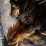 12-03-2016 - teddy przypomina sie do adopcji 3