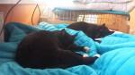 kot oli zostaje na stale w domu tymczasowym