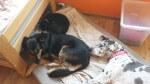 kot oli zostaje na stale w domu tymczasowym (2)