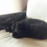 16-08-2016 - rabarbar znowu czarnym kotem (2)