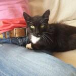 16-08-2016 - rabarbar znowu czarnym kotem