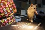 Koteczka Maddie zbiera na leczenie
