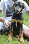 Cappy - pies do adopcji
