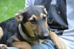 Kimi - pies do adopcji