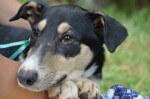 Liczi - pies do adopcji