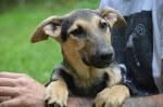 Mino - pies do adopcji