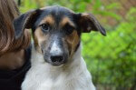 Monti - pies do adopcji