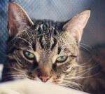 Kitka - kotka wyrzucona na bruk szuka domu