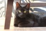 Dom (DT lub DS) dla dwóch kotów potrzebny od zaraz!