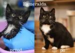 Kto pamięta Esmeraldę??