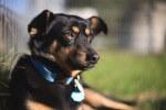 Kolejna psia rodzinka pod naszą opieką