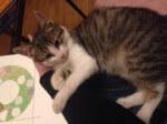 Kocie dziecko w potrzebie