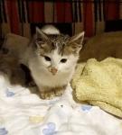 Kot z psiej budy