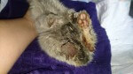 Kociak z uciętą łapką - pomóżcie nam mu pomóc