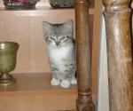 Mała koteczka szuka domu
