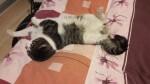 Kotek FIV-ek szuka domu tymczasowego lub stałego