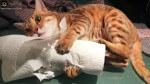Pilna potrzeba papieru!!