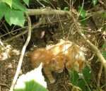 6 kociaków pilnie szuka domu