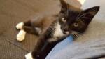 Prośba o dom dla kota Nelsona