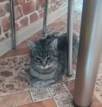Pilnie potrzebny dom tymczasowy dla kotki po operacji!