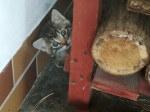 Kotki w potrzebie