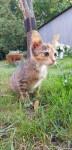 Szukamy domu dla kotki