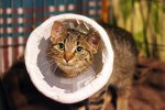 Przyjeżdża zdrowy kot do kociarni...