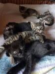 Kocie maluchy rozglądają się za domkami