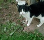Puszczykowo - dwa koty pod szpitalem