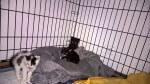 Kociaki ze śmietnika mają się dobrze!