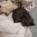 Pilnie potrzebna pomoc dla kociaków ze śmietnika!