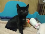 Kocie skrzaty do adopcji!